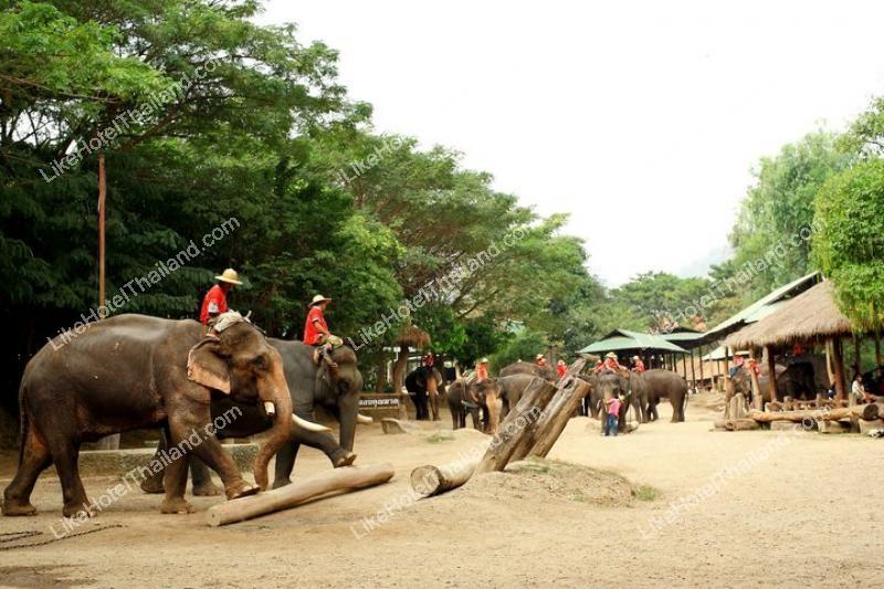 ปางช้างแม่ตะมาน เชียงใหม่