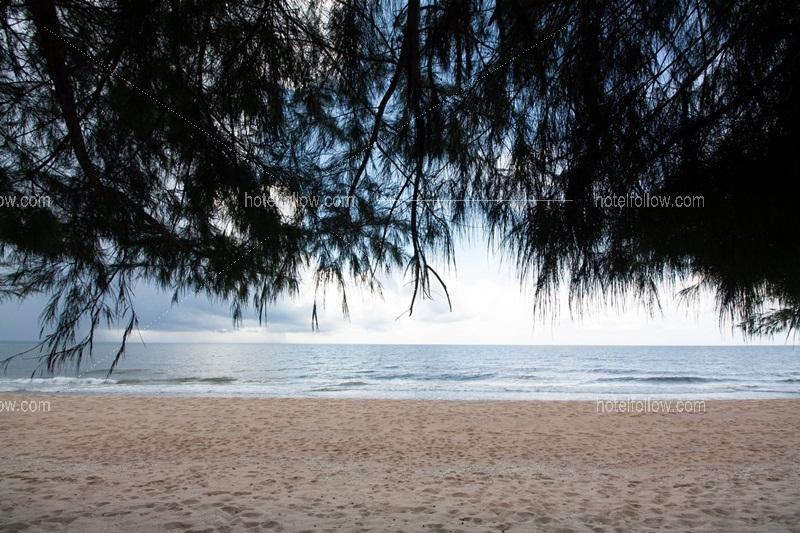 Beach Nest
